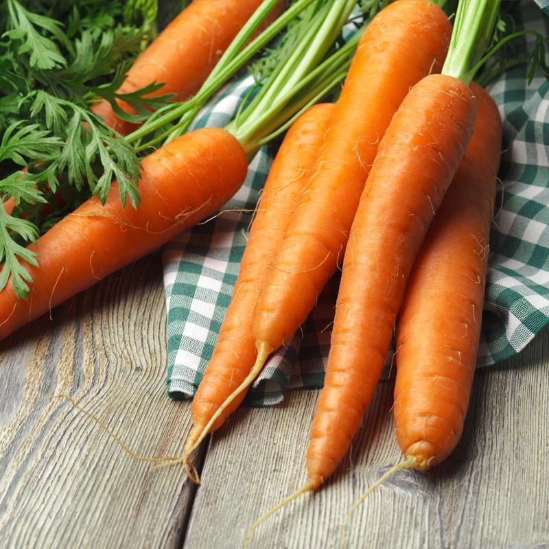 Zanahoria chantenay semillas