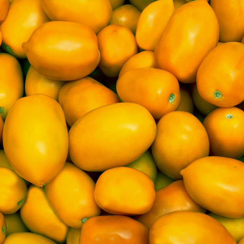tomate roma amarillo semillas
