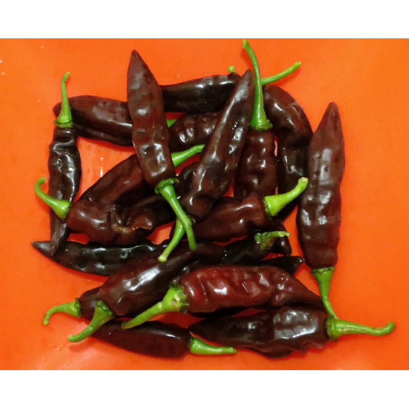 pimiento fatalii brown semillas