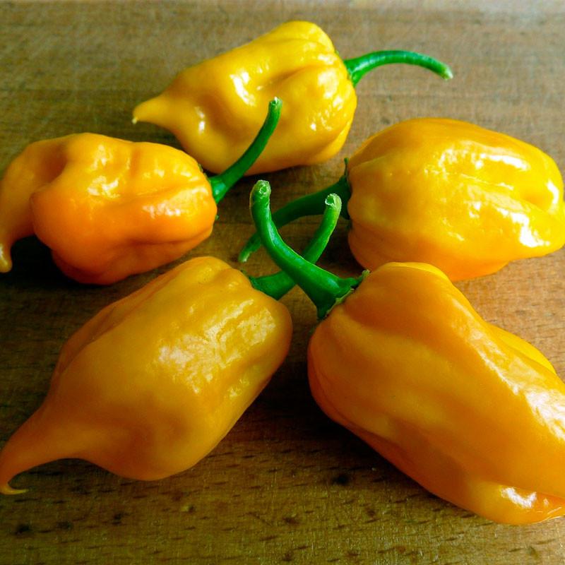 semillas pimiento habanero amarillo