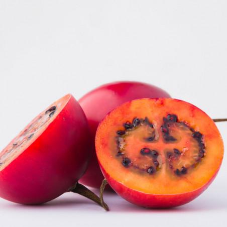 tamarillo rojo semillas