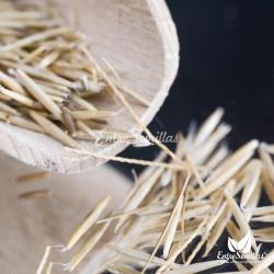 semillas esparto stipa