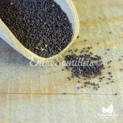 semillas papaver