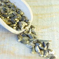 semillas de cynara