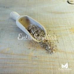 Cymbopogon citratus seeds semillas hierba limon