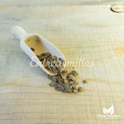 semillas jacaranda sembrar jacaranda semillas mimosifolia