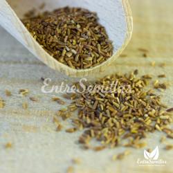 comprar semillas margarita dorada semillas camomila amarilla