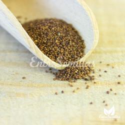 semillas mejorana comprar origanum sembrar mejorana