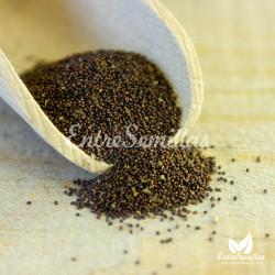 meta piperita semillas