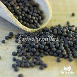 semillas salvia comun