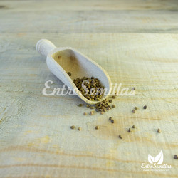 salvia argentea seeds
