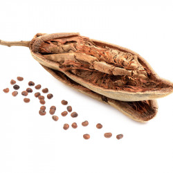 fruto seco de baobab