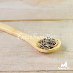 semillas para sembrar de calendula officinalis