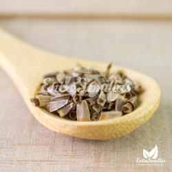 echinacea amarilla echinacea paradoxa semillas