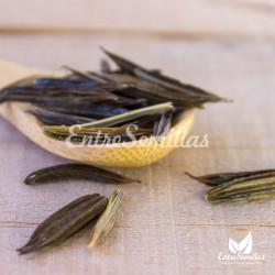 semillas mirra sembrar mirra en semillas myrrhis