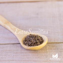 semillas de betónica comprar españa