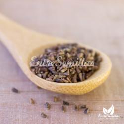 semillas de achicoria
