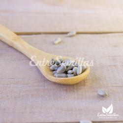 Semillas de alcachofa cynara semillas