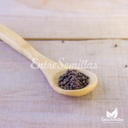 semillas de coles de bruselas