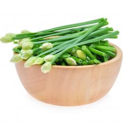 cebollino chino sembrar semillas de allium