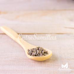 semillas de ratibida columnifera