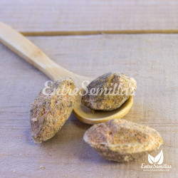 semillas almendro indio
