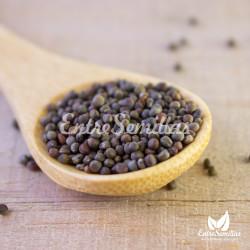 semillas de brassica oleracea variedad sabauda