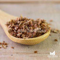 birch seeds betula pendula