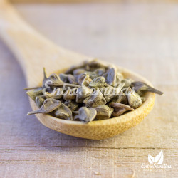 semillas acer buergerianum maple seeds