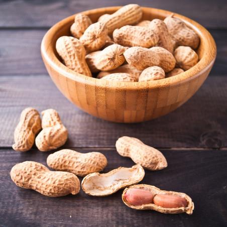 semillas de planta cacahuete para sembrar cacahuete desde semillas