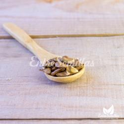 semillas de pinsapo para sembrar