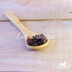 Schisandra chinensis semillas