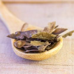 semillas de acer palmatum acer semillas arce