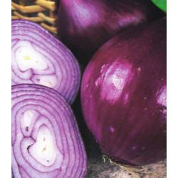 Cebolla morada 'Red Brunswick' - Sobre 100 semillas
