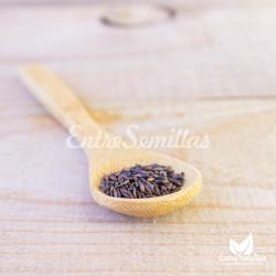 semillas siempreviva estatice
