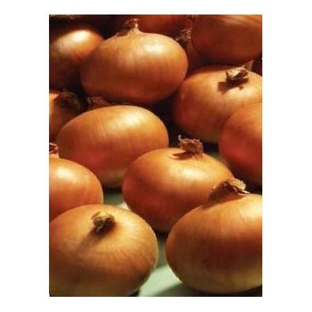Cebolla Ailsa Craig - Sobre 100 semillas
