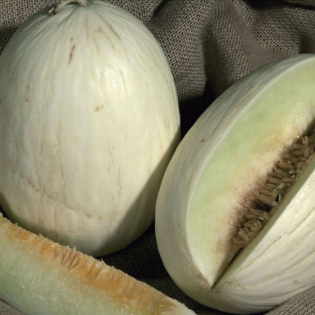 semillas de melón blanco