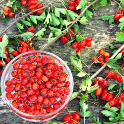 frutos bayas crataegus monogyna
