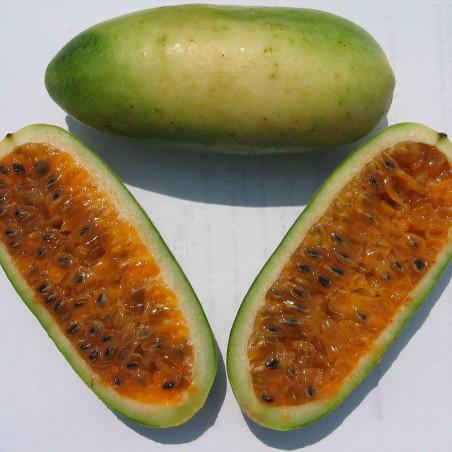 semillas de curuba