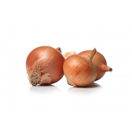 semilla cebolla tardia de valencia