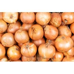 semillas de cebolla valenciana tardia