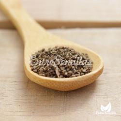 semillas de culantro recao Eryngium foetidum