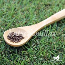 Perilla 'Verde rizada' semillas perilla frutescens