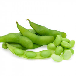 semillas de soja verde para sembrar