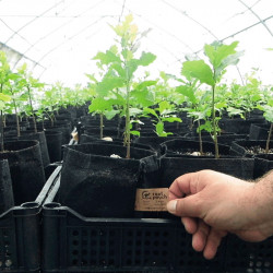 root pouch plantas
