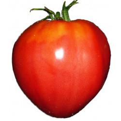 Tomate Corazón de Buey - Sobre 25 semillas