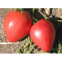 Tomate Corazón de Buey Rosa - Sobre 25 semillas