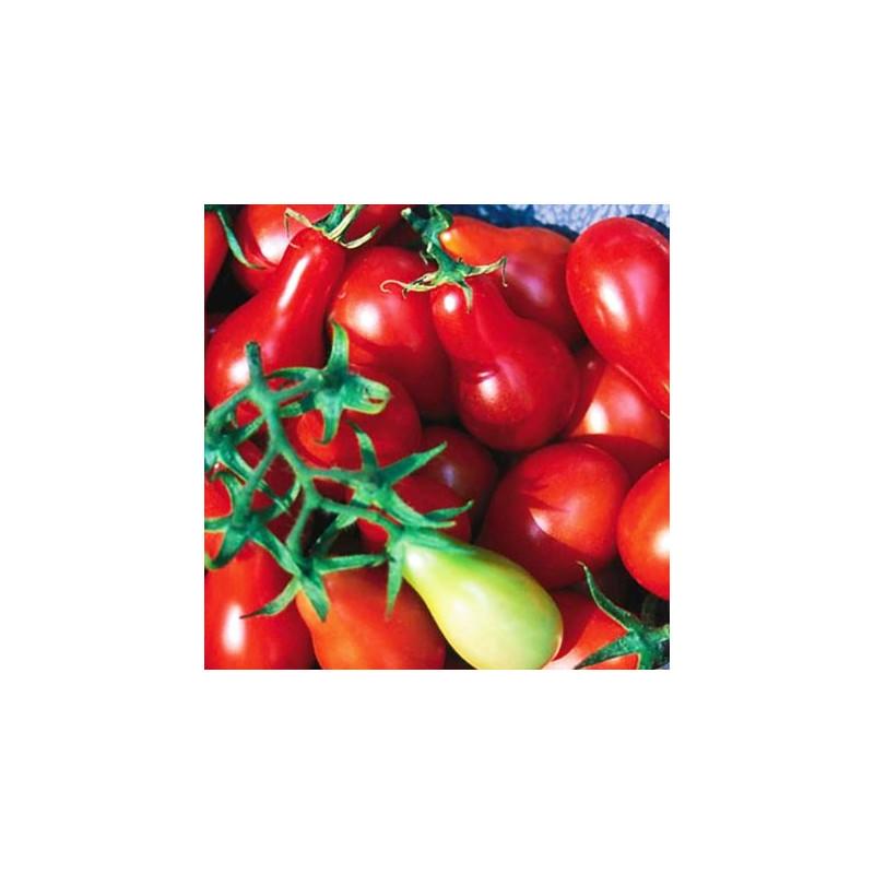 Tomate Cherry Pera Rojo - Sobre 25 semillas