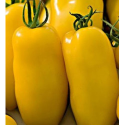 Tomate Banana Legs - Sobre 25 semillas