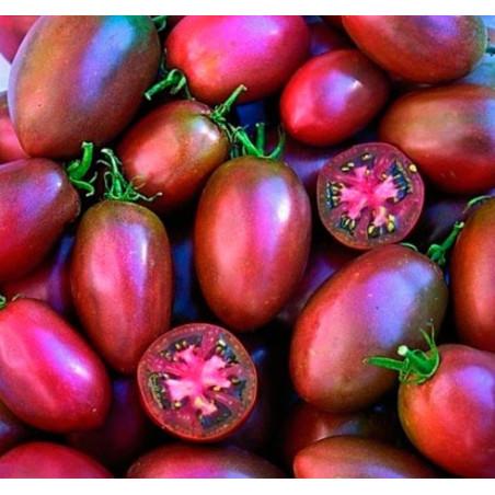 Tomate Púrpura Ucraniano - Sobre 25 semillas
